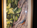 dgpf-l-moses-woodpecker